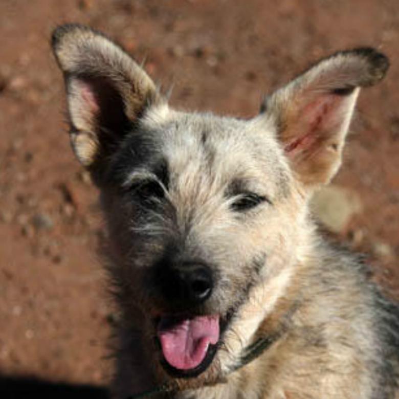 Bimi - Algarve Dog Rescue