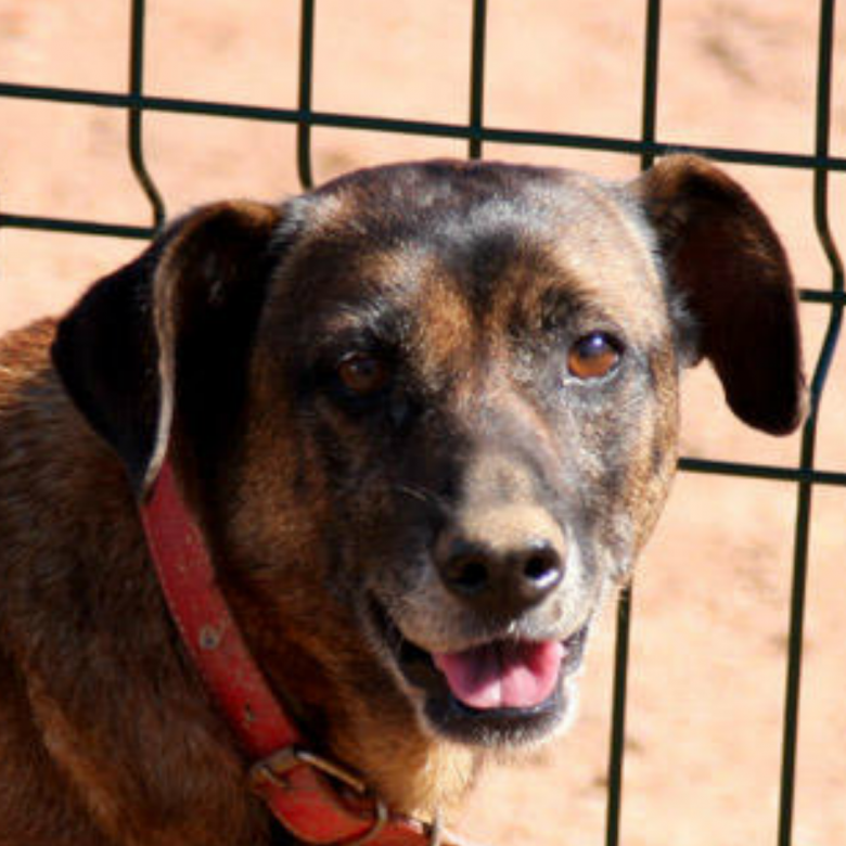 Bunky - Algarve Dog Rescue