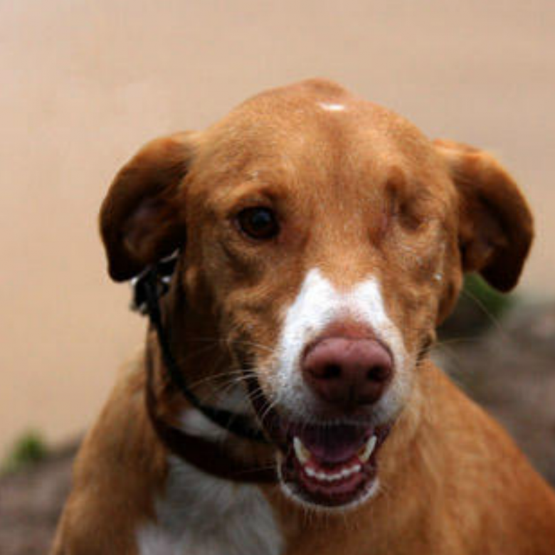 Blindy - Algarve Dog Rescue