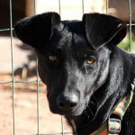 Buddo - Algarve Dog Rescue