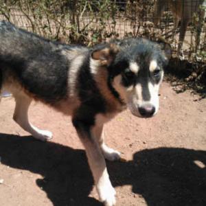 Busky - Algarve Dog Rescue