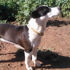 Bubba - Algarve Dog Rescue
